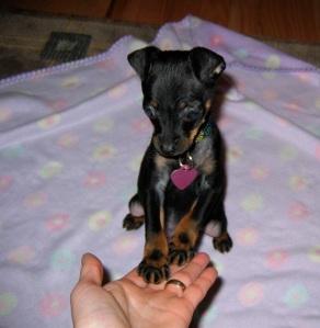 puppybiting1
